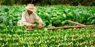 Propiedades antioxidantes beneficiosas de los productos de tabaco